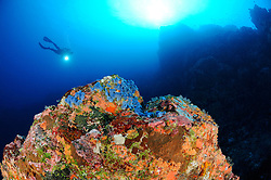 Taucher an farbenfrohem Riff, scuba diver at colorful coral reef, Gili Tepekong, Candidasa, Bali, Indopazifik, Indonesia, Asien, Indo-Pacific Ocean, Asia