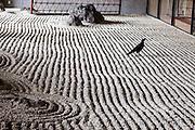 Tokyo - Un corbeau posée dans un jarden zen