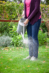 Applying liquid biological control to a lawn with a watering can.