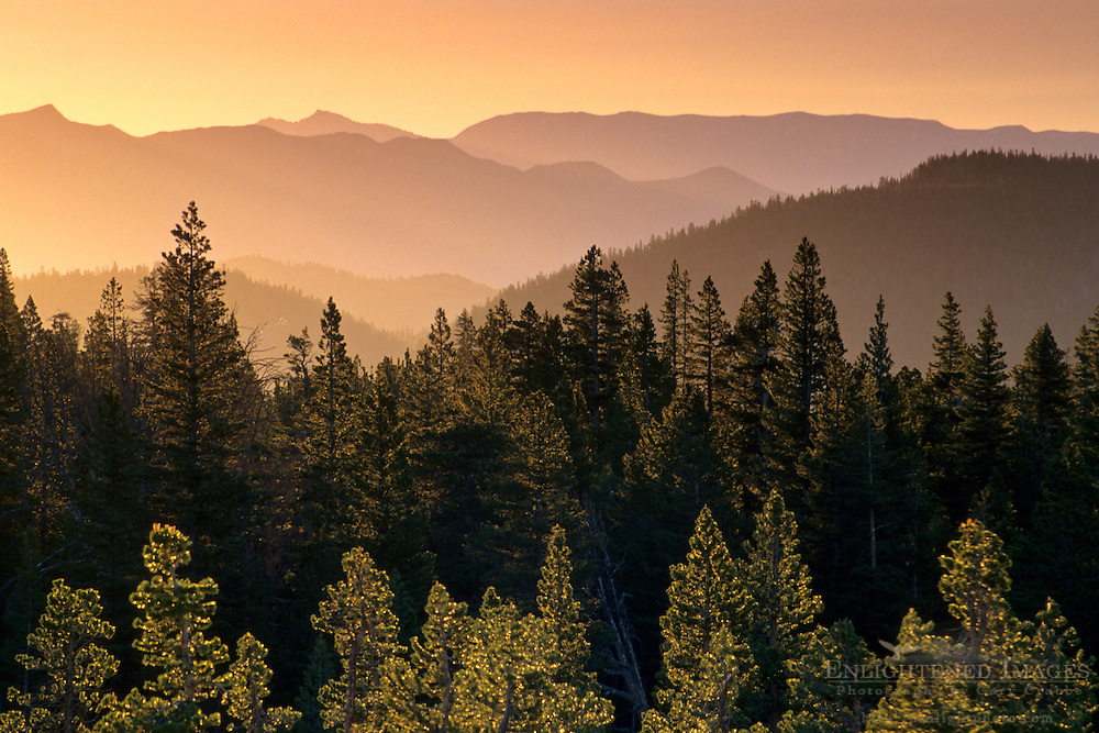 Sunrise light over forest, from Minaret Summit Mono County, Eastern Sierra, CALIFORNIA