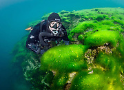 Chest-mounted Lungfish rebreather diver with the green algae at Dutch Springs, Scuba Diving Resort in Pennsylvania