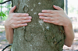 Human hands embracing beech tree