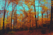 Dreamy and colourful forest scenery on a late October day - manipulated photograph