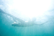 Isla Margarita_VEN, Venezuela...Imagem subaquatica do Balneario de Isla Margarita, Venezuela...Underwater image  of Isla Margarita resort, Venezuela...Foto: JOAO MARCOS ROSA / NITRO