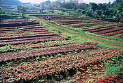 Herb and vegatable farm, Island of Hawaii<br />