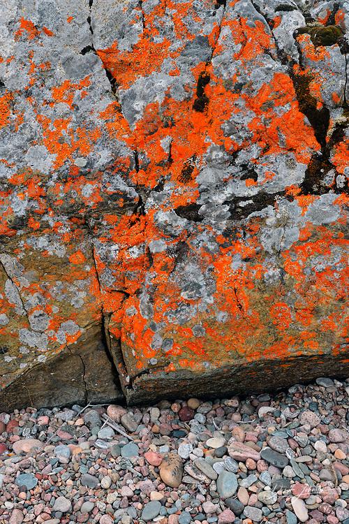 Glacial erratic with orange lichen, Arctic Haven Lodge, Nunavut, Canada