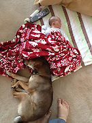 """A baby's best friend! How Zero, the adorably protective Shiba Inu, watches over his owner's two-week-old daughter at all times<br /> <br /> They say dogs are a man's best friend, but one pup has charmed the internet for taking a particular liking to a newborn girl.<br /> Baby River's mother, who goes by the Reddit name Prolificsalo, has captured dozens of moments where Zero, a Shiba Inu, appears very attached to the two-week-old, watching over her as she has her diaper changed and cuddling up to her while she naps.<br /> The resulting images are a testament to the adorable friendships that can spark up between humans and animals, especially when the animal takes his protective role very seriously.<br /> <br /> Prolificsalo wrote: 'We just had a new baby two weeks ago. My dog has decided that she is his and stays as close as he can to her at all times.'<br /> One of the pictures shows River lying on a blanket on the floor, with Zero sitting next to her and resting his nose in her open hand.<br /> <br /> In another, River takes a nap on a couch, and Zero's head can be seen poking out from below as he watches over her intently.<br /> Zero even keeps a watchful eye over River when she has her diaper changed.<br /> <br /> Indeed, in one of the photos, Zero perches on a bed, looking protectively at River as she lies on a table at the other end of the room to have her diaper changed.<br /> Prolificsalo's post has had 1,534 responses since it was shared on Monday, with many commenters writing that their dogs behaved in similar ways with their children.<br /> 'We had a similar situation with our shelty,' wrote one Reddit user. 'Except when my mother went to burp me. . . the shelty would growl at her for """"hurting"""" me.'<br /> Another commenter wrote about how her sheep-herding dog would look after her when she was a baby.<br /> <br /> As I got older and could start to crawl and then walk, my dog used to herd me and keep me close,' she wrote.<br /> 'If I got too far, she'd pick"""