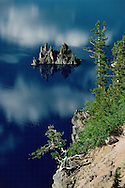 Crater Lake National Park, Oregon, tree, reflection