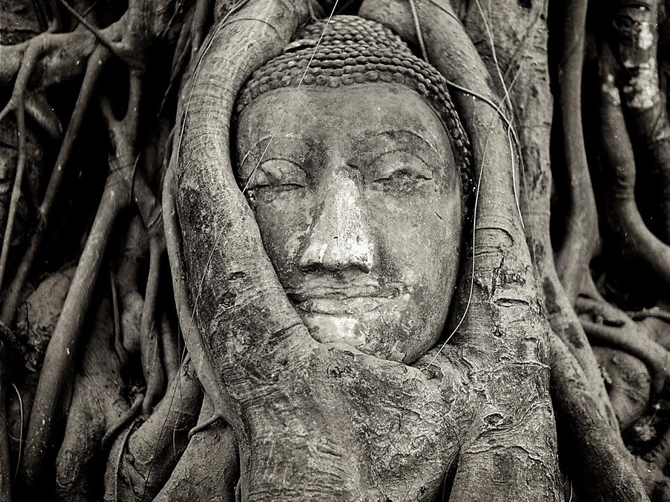 Buddha Head in Banyan Tree Roots, Wat Mahathat, Ayutthaya. Photo by Lorenz Berna