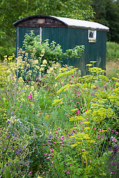 Parsnip with sanguisorba and Dianthus carthusianorum in front of the Shepherd's Hut