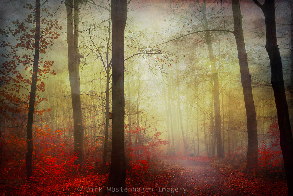 Forest track on a misty late autumn morning - photograph edited with texture overlays