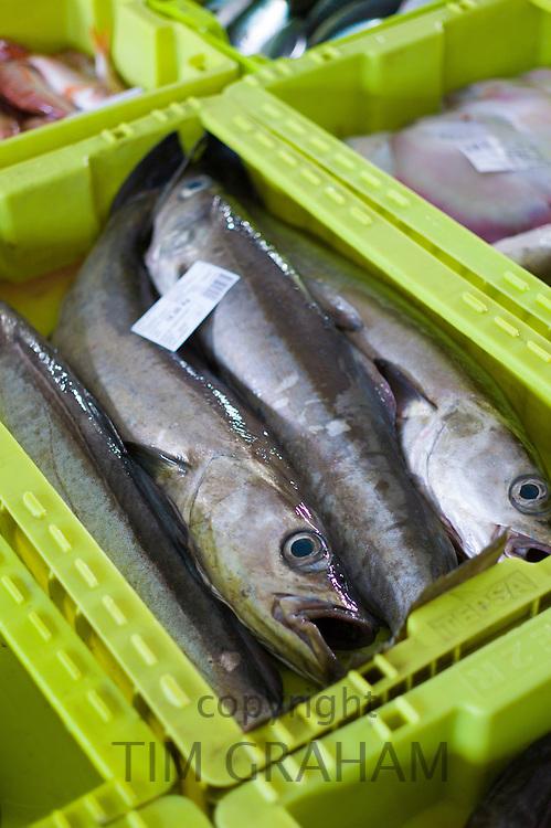 Fresh caught fish at Confradia de Pescadores de Luarca, Confederation of Luarca Fishermen, at Puerto Luarca in Asturias, Spain  RESERVED USE