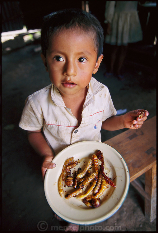 Young Daniel Piña Real, 4, displays his lunch of live fried chiro worms (the larvae of longhorn beetles from the family Cerambycidae ) the worms were pulled from the infected trunk of a pansona tree by Daniel's father and siblings, and were prepared by Marleni, his older sister. Koribeni, Peru. (page 161)