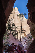 """Tall tree in Slot Canyon. See fantastic hoodoos and a great slot canyon in Kasha-Katuwe Tent Rocks National Monument, in New Mexico, USA. Hike the easy Cave Loop Trail plus Slot Canyon Trail side trip (3 miles round trip), 40 miles southwest of Santa Fe, on the Pajarito Plateau. Distinctive cone-shaped caprocks protect soft pumice and tuff beneath. Geologically, the Tent Rocks are made of Peralta Tuff, formed from volcanic ash, pumice, and pyroclastic debris deposited over 1000 feet thick from the Jemez Volcanic Field, 7 million years ago. Kasha-Katuwe means """"white cliffs"""" in the Pueblo language Keresan."""