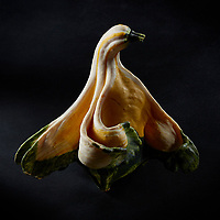 Series: Portrait of a Gourd