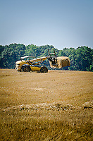 Freshly harvested wheat provides hay that is baled, loaded, and moved to storage.