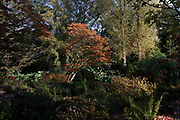 Autumn leaves and colours in the gardens at Winterbourne Botanic Garden, the botanical garden of the University of Birmingham, located in Edgbaston, Birmingham, United Kingdom. Set in 7 acres, it is notable as a rare surviving example of an early 20th century high status suburban 'villa' garden, inspired by the Arts and Crafts movement of the Edwardian period. Both Winterbourne Botanic Garden and Winterbourne House are owned by the University of Birmingham and are open to the public as a heritage attraction.