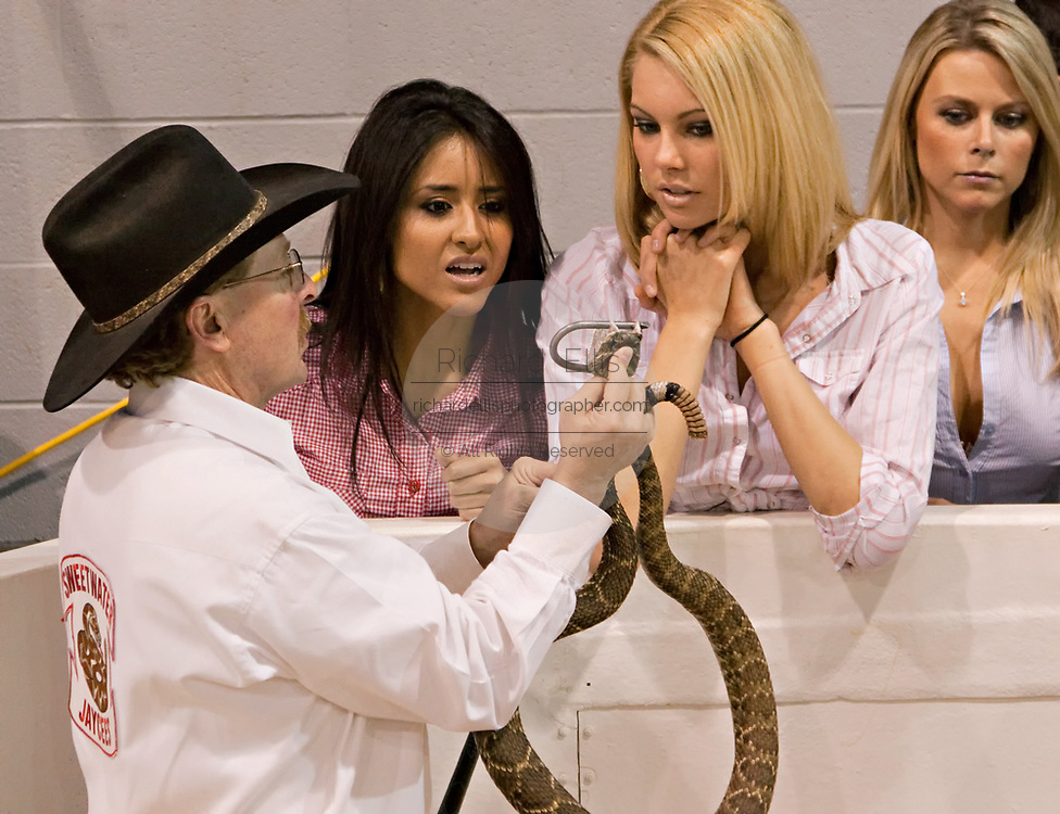 A Jaycee volunteer snake handler shows members of the 'Texas Adventure Girl' team a western diamondback rattler during the 51st Annual Sweetwater Texas Rattlesnake Round-Up March 14, 2009 in Sweetwater, Texas. During the three-day event approximately 240,000 pounds of rattlesnake will be collected, milked and served to support charity.