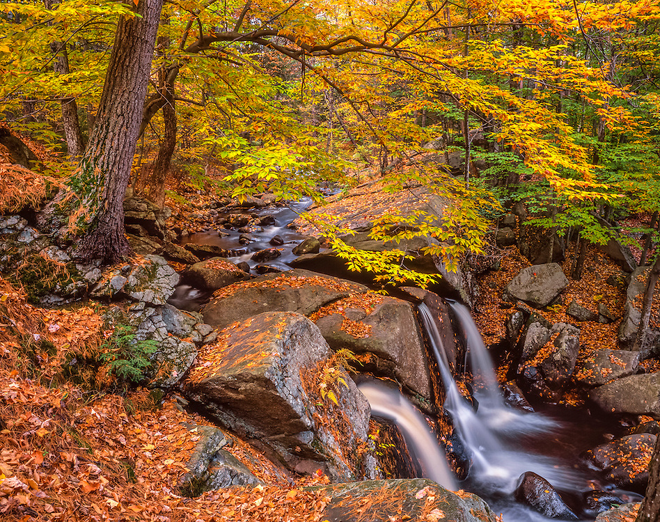Trapfalls Brook waterfalls over bedrock in autumn, fall foliage & fallen leaves, Williard Brook State Forest, MA