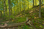 Hardwood forest in spring near Louth Falls.  Golden Horseshoe. Niagara Peninsula.<br />Jordan<br />Ontario<br />Canada