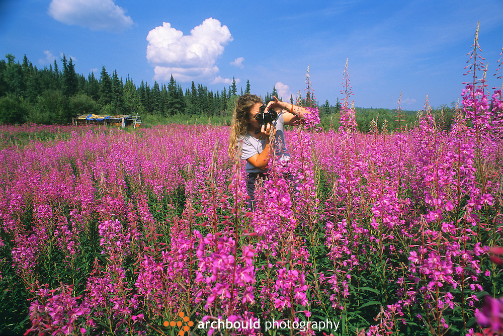 A woman photographs fireweed in the Yukon