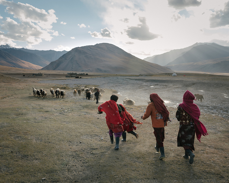 """Boys and girls returning to camp with yak calves. Life in Baiqara, a Wakhi High pasture inhabited for about 6 months of the year, from May until October. Guiding and photographing Paul Salopek while trekking with 2 donkeys across the """"Roof of the World"""", through the Afghan Pamir and Hindukush mountains, into Pakistan and the Karakoram mountains of the Greater Western Himalaya."""