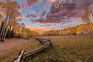 Dramatic sunset light on aspen grove at Owl Creek Pass in the Uncompahgre National Forest, Colorado, USA