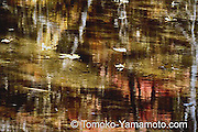 Several leaves on water surface and brown riverbed interspersed with reflections of tree limbs.  The reflection of red leaves in bokeh.  The tonality of this photo is Japanese.  Impressionist reflection photo by Tomoko Yamamoto. Original on 35mm slide film.