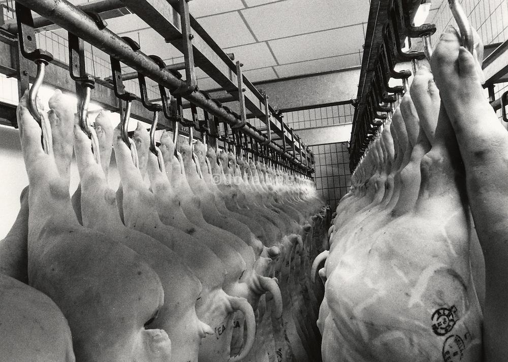 Pig halves stored in slaughterhouse