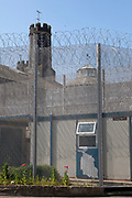 Prison palm trees, planted in the grounds of prisons in the United Kingdom.  HMP Kingston, Portsmouth, United Kingdom. Kingston prison is a category C prison holding indeterminate sentenced prisoners.