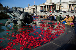 © Licensed to London News Pictures. 11/11/2016. London, UK.  Poppies float in the fountains during Silence in the Square, a service held in Trafalgar Square, London to mark Remembrance Day. A minutes silence is held on the 11th hour of the 11th day of the 11th month, to recall the end of hostilities of World War I.  Photo credit: Ben Cawthra/LNP