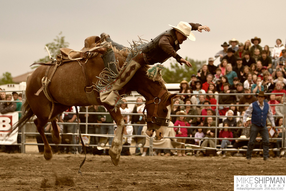 A cowboy gets bucked off the front of his horse, Eagle Rodeo, Eagle, Idaho, USa
