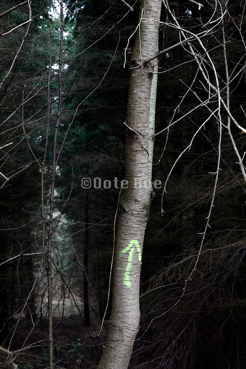arrow placed on a trunk directing into a dense forest