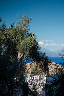A view over the house and olive grove to the Aegean Sea from the Orkos Estate, Paxos, Greece, Europe