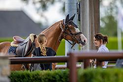 Linssen Rogier, NED, Kosstelo<br /> Nationaal Kampioenschap KWPN<br /> 5 jarigen springen final<br /> Stal Tops - Valkenswaard 2020<br /> © Hippo Foto - Dirk Caremans<br /> 19/08/2020