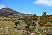 Torc Mountain and The Old Kenmare Road, Killarney, one of Kerry's most famous trails.<br /> Photo Don MacMonagle - macmonagle.com
