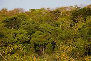 Sao Jose do Rio Preto_SP, Brasil...Programa Biota da Unesp, na foto a vegetacao...The Biota program of Unesp, in this photo the vegetation.. .FOTO: JOAO MARCOS ROSA / NITRO