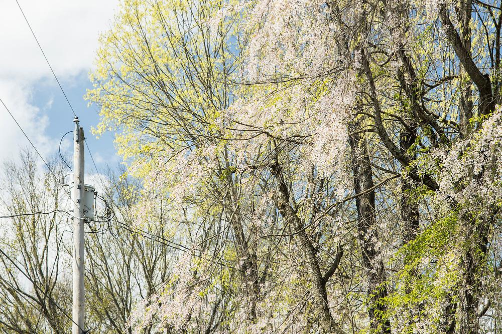 Spring, Johnson City, Tennessee