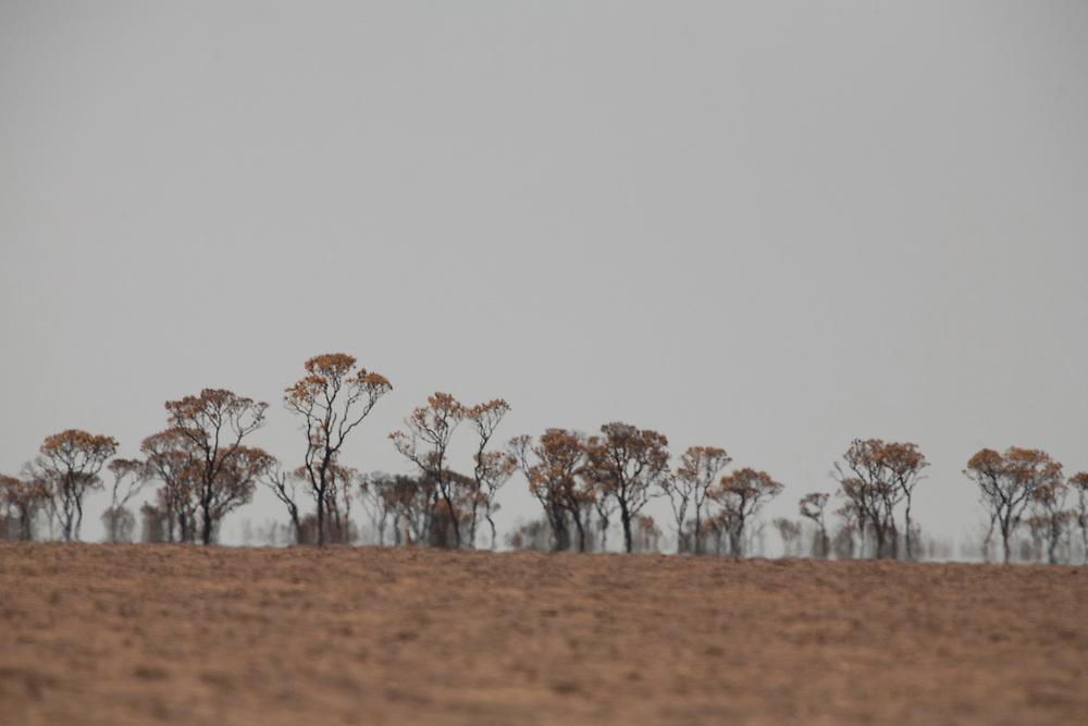 Chapada Gaucha_MG, Brasil...Vegetacao do Parque Nacional Grande Sertao Veredas em Chapada Gaucha, Minas Gerais...Vegetation in National Park Grande Sertao Veredas in Chapada Gaucha, Minas Gerais...Foto: LEO DRUMOND / NITRO