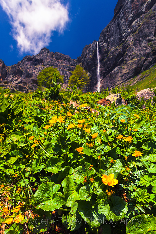 Yellow flowers under a waterfall