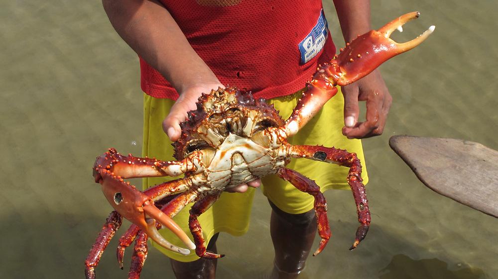 Indígenas guna / cangrejo en la comarca de Guna Yala, Panamá.