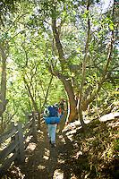 Backpackers hike Pine Ridge Trail, Big Sur, California.