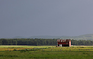 Pine Island, New York - Sunlight illuminates a barn and fields with storm clouds in the background in the Black Dirt region on May 21,, 2011.