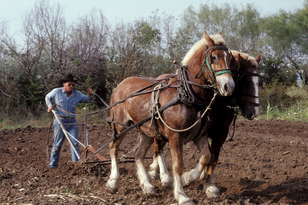 Farmer plowing field with traditional hand plow and horses at Texas Pioneer Farm in Austin, Texas.<br /> ©Bob Daemmrich/