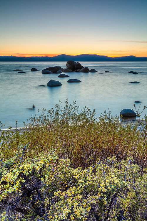 """""""Sunset at Whale Beach, Tahoe 8"""" - Photograph of wildflowers with Whale Rock and an orange sunset in the distance."""