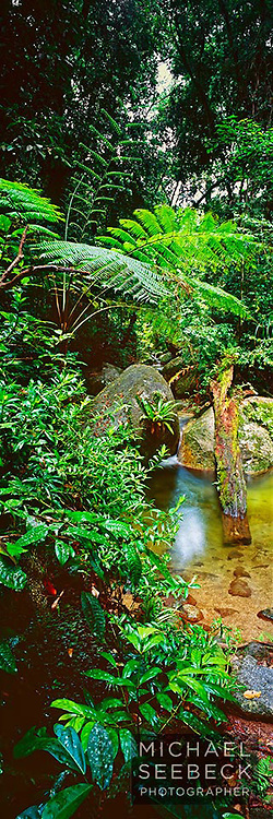 A vertical format photograph of a scene of a stream near mossman gorge.<br /> <br /> Limited Edition Print