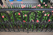 city home garden with pink tulips