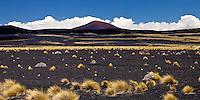 VOLCAN MORADO, ESTEPA DE COIRONES (Festuca gracillima - fam. poaceas) Y SUELO NEGRO DE PIEDRAS VOLCANICAS, PAMPA NEGRA, RESERVA PROVINCIAL LA PAYUNIA (PAYUN, PAYEN), MALARGUE, PROVINCIA DE MENDOZA, ARGENTINA (PHOTO © MARCO GUOLI - ALL RIGHTS RESERVED)