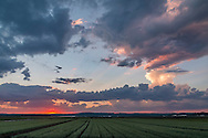 Goshen, New York - Sunset skies over Black Dirt fields  on July 22, 2016.
