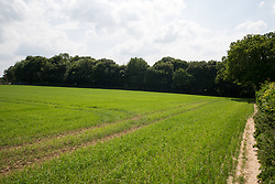 Wendover, UK. 16th June, 2021. Ancient woodland at Jones Hill Wood in Buckinghamshire is pictured as works for the HS2 high-speed rail link continue (to the left of the image). A large section of the ancient woodland, which contained resting places and/or breeding sites for pipistrelle, barbastelle, noctule, brown long-eared and natterer's bats, has now been entirely cleared of trees and vegetation by contractors working on behalf of HS2 Ltd.